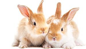 conejos en pareja